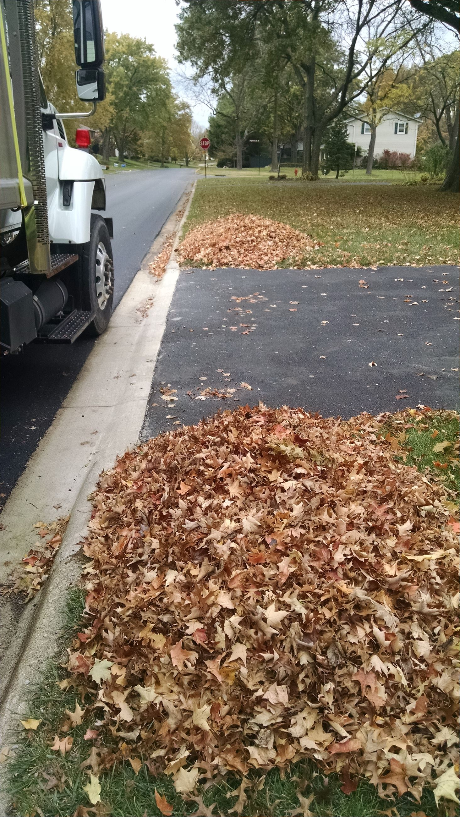 Perfect Leaf Pile WH